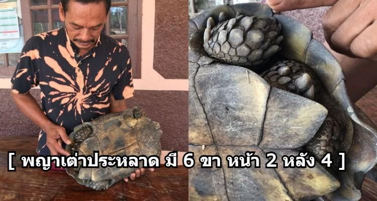 เต่าแปลกให้โชค